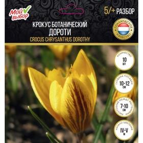 Крокус ботанический Дороти, р-р 5/+, 10 шт Ош