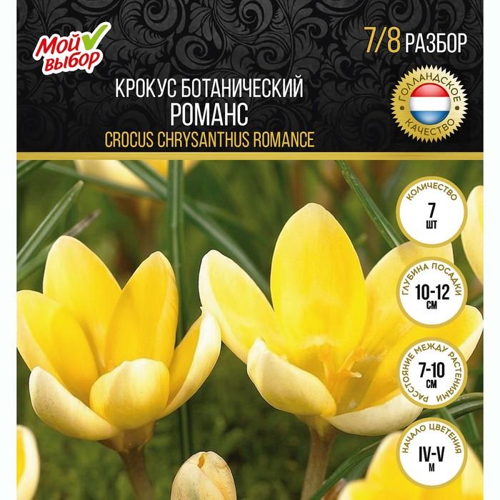 Крокус ботанический Романс, р-р 5/+, 10 шт