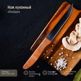 Нож кухонный «Эльбрус», гладкое лезвие 11,5 см