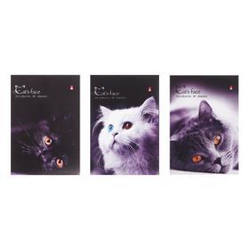 Блокнот А6, 40 листов на скрепке «Котята», микс из 3-х видов