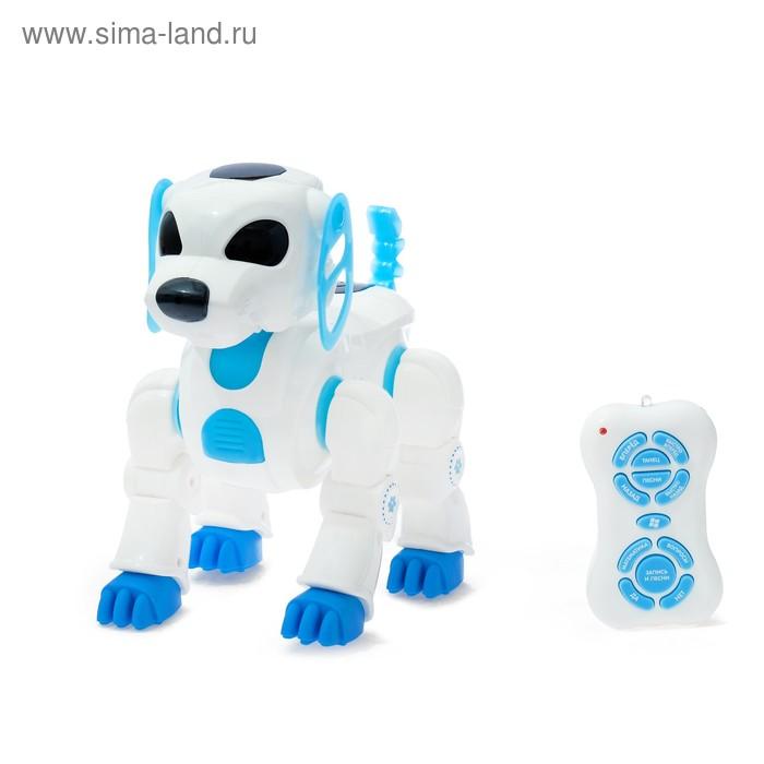 Робот-собака радиоуправляемый интерактивный «Лакки», световые и звуковые эффекты