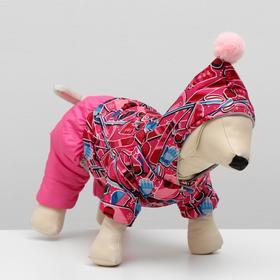 Комбинезон 'Тандем' для собак, размер 2XL (ДС 34-36 см, ОШ 34-36 см, ОГ 50-52 см) Ош