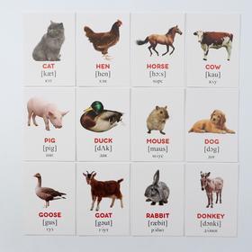 Обучающие карточки по методике Г. Домана «Домашние животные на английском языке», 12 карт, А6