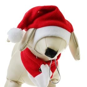 Костюм 'Новогодний' для собак с шарфиком, S- M  (обьем головы 26-28 см, высота 18-20 см) Ош