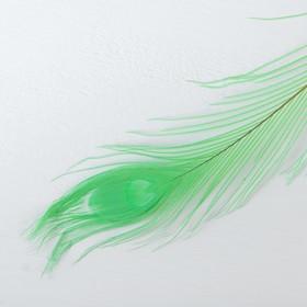 Перо павлина для декора, цвет зеленый Ош