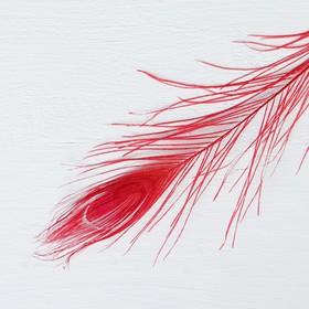 Перо павлина для декора, цвет красный Ош