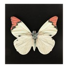 Блок с липким краем «Бабочки», 30 листов, МИКС