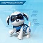 Интерактивная собака-робот «Чаппи», русское озвучивание, световые и звуковые эффекты, цвет синий - Фото 5