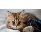 Пазл «Котенок», 200 деталей