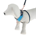 Комплект амуниции Dogness для кошек и собак до 5 кг, с адресником, нейлон, синий
