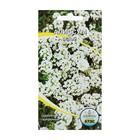 Семена цветов Алиссум белый, О, 0,1 г