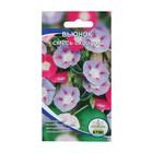 Семена цветов Вьюнок смесь, О, 10 шт