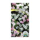 Семена цветов Гипсофила изящная смесь окрасок, О, 0,1 г