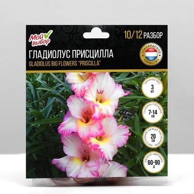 """Гладиолус Крупноцветковый """"Присцилла"""", р-р 10/12, 7 шт"""