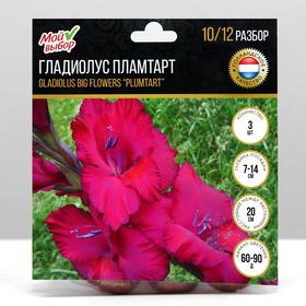 "Гладиолус Крупноцветковый ""Пламтарт"", р-р 10/12, 7 шт"