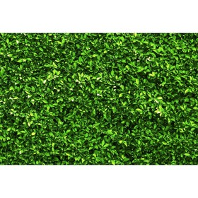 Фотобаннер, 250 × 150 см, с фотопечатью, «Зелёная изгородь» Ош