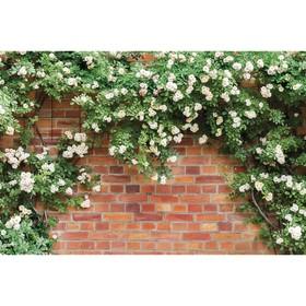 Фотобаннер, 250 × 150 см, с фотопечатью, «Белые цветы» Ош