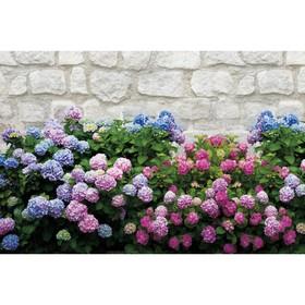 Фотобаннер, 250 × 150 см, с фотопечатью, «Цветы» Ош