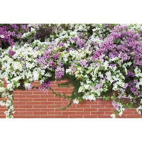 Фотобаннер, 250 × 150 см, с фотопечатью, «Весенние цветы» Ош
