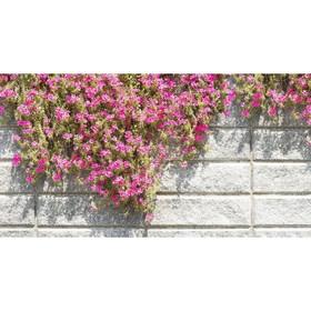 Фотобаннер, 250 × 150 см, с фотопечатью, «Стена с цветами» Ош