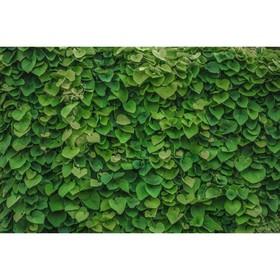Фотобаннер, 250 × 150 см, с фотопечатью, «Зелёная стена» Ош