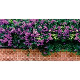 Фотобаннер, 300 × 160 см, с фотопечатью, «Фиолетовые цветы» Ош
