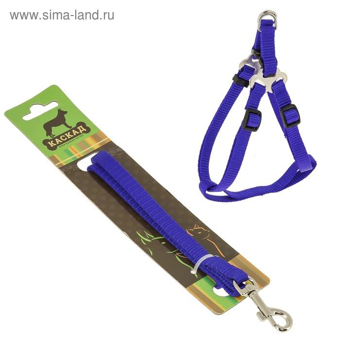Комплект амуниции, ширина 1 см, шлейка 20-40 см, поводок 120 см, нейлон, синий   427472