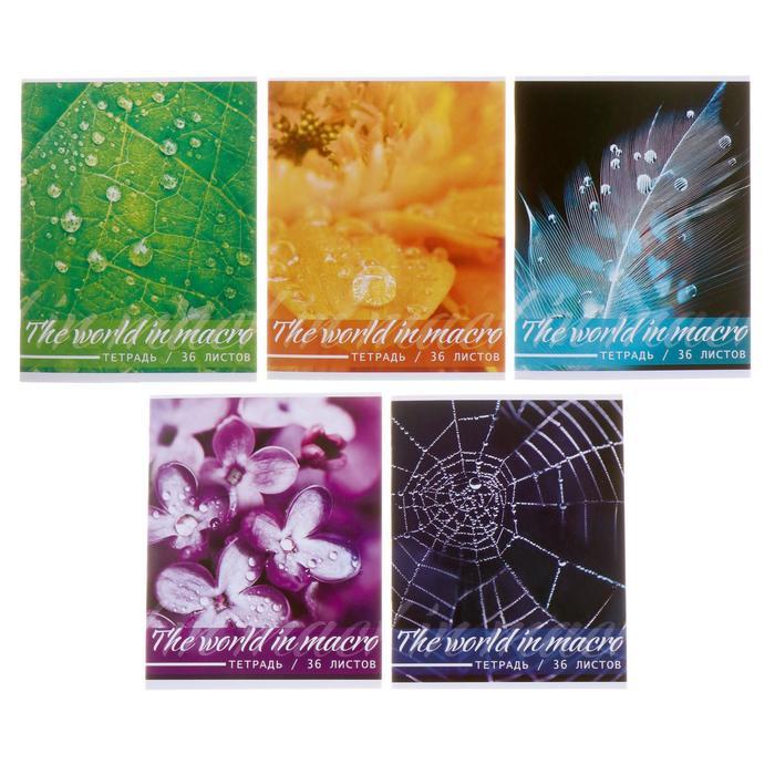 Тетрадь 36 листов клетка «Микромир», картонная обложка, офсет, МИКС
