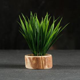 Кашпо для растения 'Эко-спил' d-6 см, h-2,5 см Ош