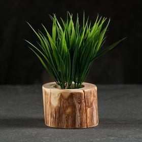 Кашпо для растения 'Эко-спил', d-6 см, h-5 см, микс Ош
