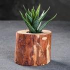 """Кашпо для растения """"Эко-спил"""", d-6 см, h-7 см, микс"""