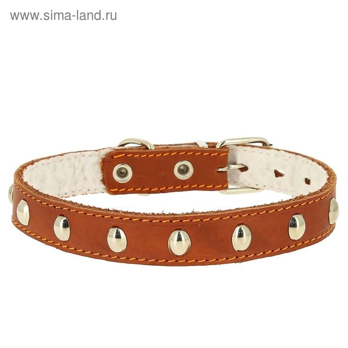 Ошейник кожаный украшенный, на синтепоне, ОШ 21-27 х 1,5 см, микс цветов