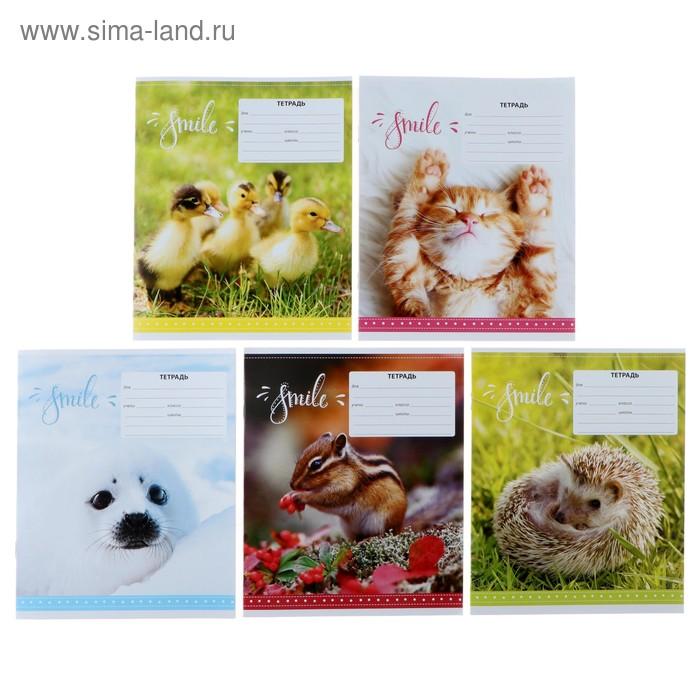 Тетрадь 12 листов линейка «Питомцы. Smile», обложка мелованный картон, МИКС