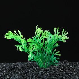 Растение искусственное аквариумное, до 9 см Ош