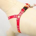 Комплект «GlaМууур»: шлейка 28-47 см, поводок 120 см - Фото 6