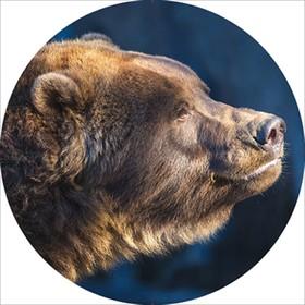 Чехол запасного колеса Медведь R15 диаметр 67см Skyway экокожа Ош