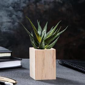 Кашпо для кактуса'Эко-спил', d-6, h-7 см, массив дуба Ош