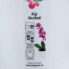 Кашпо для орхидей «Фиджи», 1,6 л, цвет белый перламутр - Фото 2