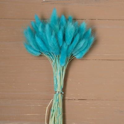 Сухие цветы лагуруса, набор: max 60 шт., цвет голубой