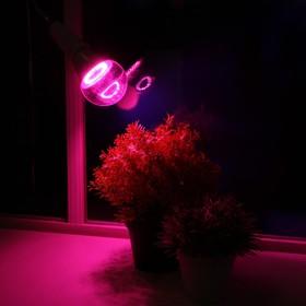 Светодиодная лампа для растений ( фитолампа ) Luazon 12 Вт, E27, 220В Ош