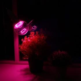 Светодиодная лампа для растений ( фитолампа ) Luazon 15 Вт, E27, 220В Ош