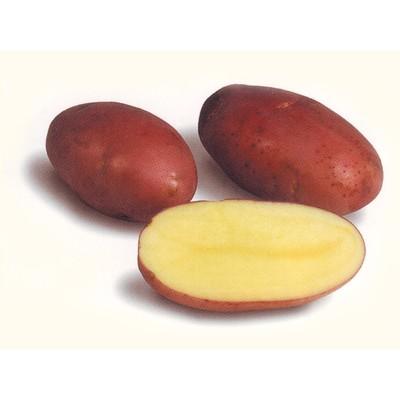 """Семенной картофель """"Розара"""", 2 кг +/- 10%, Элита - Фото 1"""