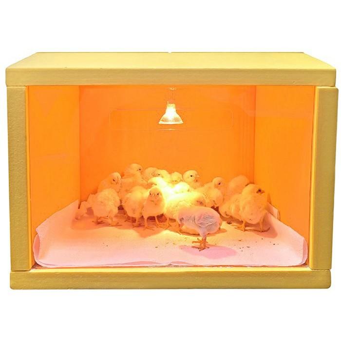 Брудер для цыплят, 48 × 33, 220 В, «SITITEK HD 35W»