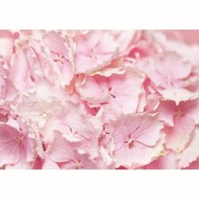 Фотообои 'Цветы гортензии', 200х140 см Ош