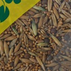 Смесь сидератов для чеснока, 0,5 кг - Фото 2