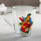 Кружка «Грация. Тропические птицы», 250 мл, рисунок МИКС