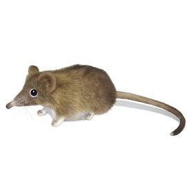 Мышь-землеройка, 14 см