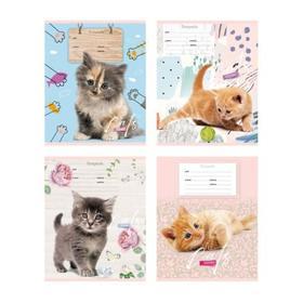 Тетрадь 12 листов в косую линейку Cat story, обложка мелованный картон, МИКС