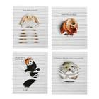 Тетрадь 48 листов Animals Between Lines в клетку, обложка - мелованный картон, выборочный УФ-лак, на скрепке, 4В, МИКС