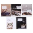 Тетрадь 12 листов в линейку «Удивительные котята», обложка мелованная бумага, ВД-лак, МИКС